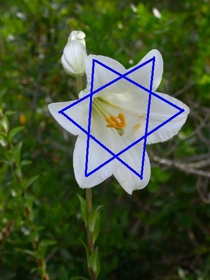 Лилия - символ непорочного зачатия Девы Марии