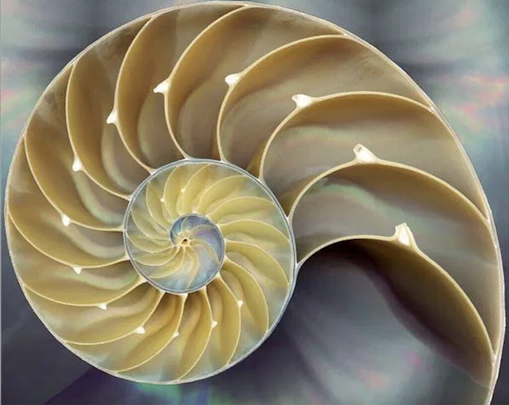 Морская раковина в разрезе